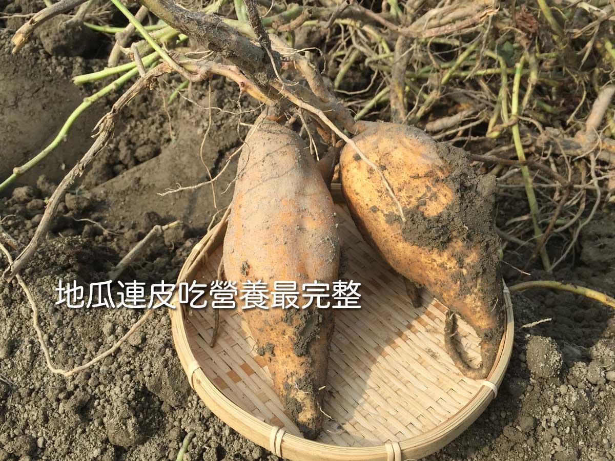台農57號黃金地瓜 是連皮吃最適合的品種,因為他是所有品種皮最薄的,皮薄肉Q全台最好吃名不虛傳呀