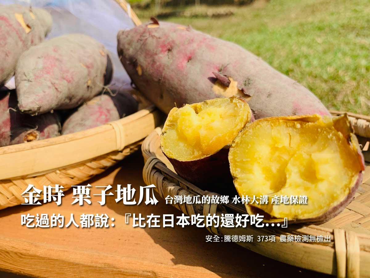 ▲▲▲水林大溝地區,所種植的日本品種『金時栗子地瓜』,口感非常綿密近似栗子,也是不可錯過的養生的『原形食物』。