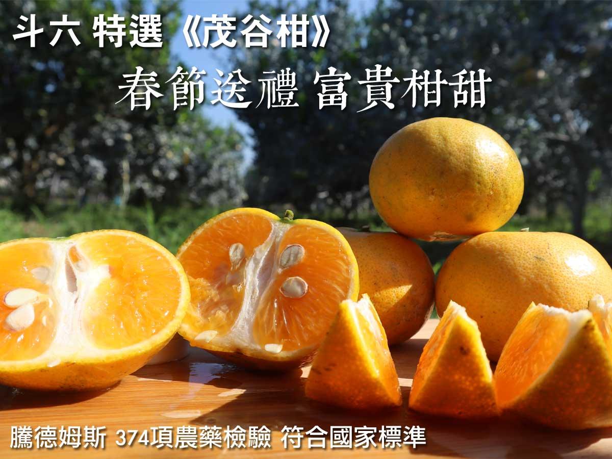 ▲▲▲柑吉類最高級最頂級的品種茂谷柑熱賣中,今年收到這些黃金祝福的朋友們一定感到新的一年無比的希望…