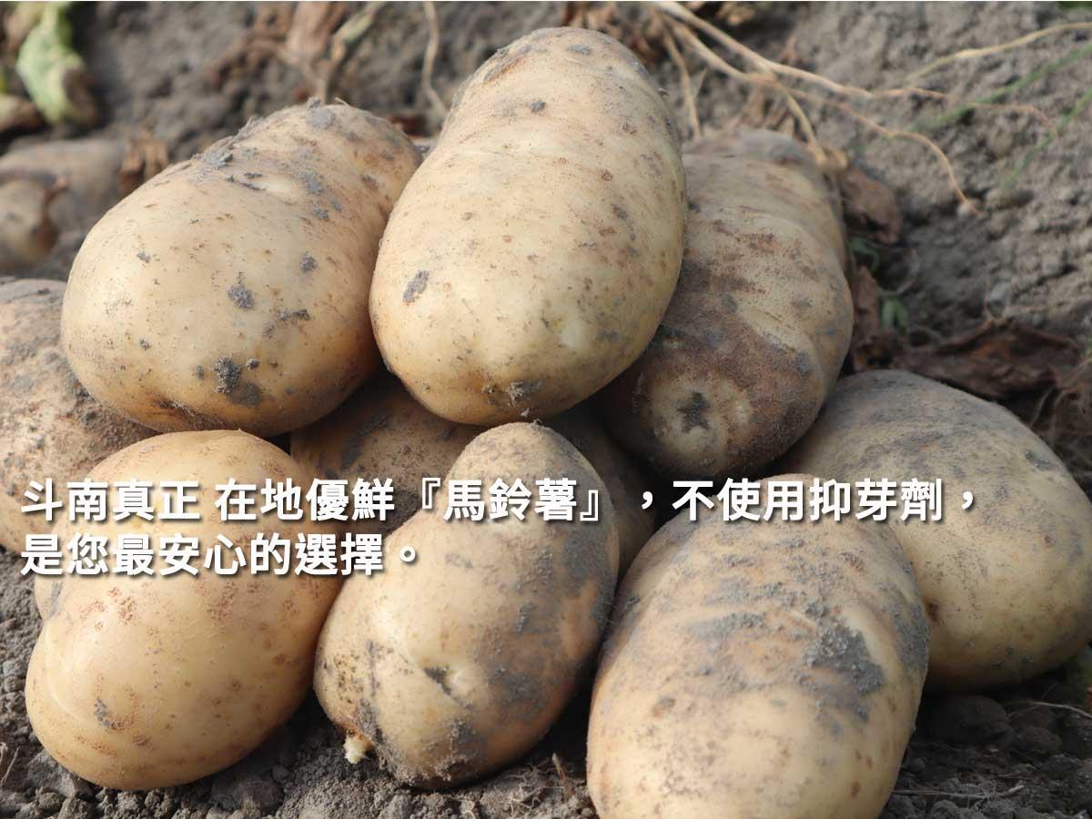 雲林 斗南 在地優鮮『馬鈴薯』 珍貴口感綿密和進口的就是不一樣