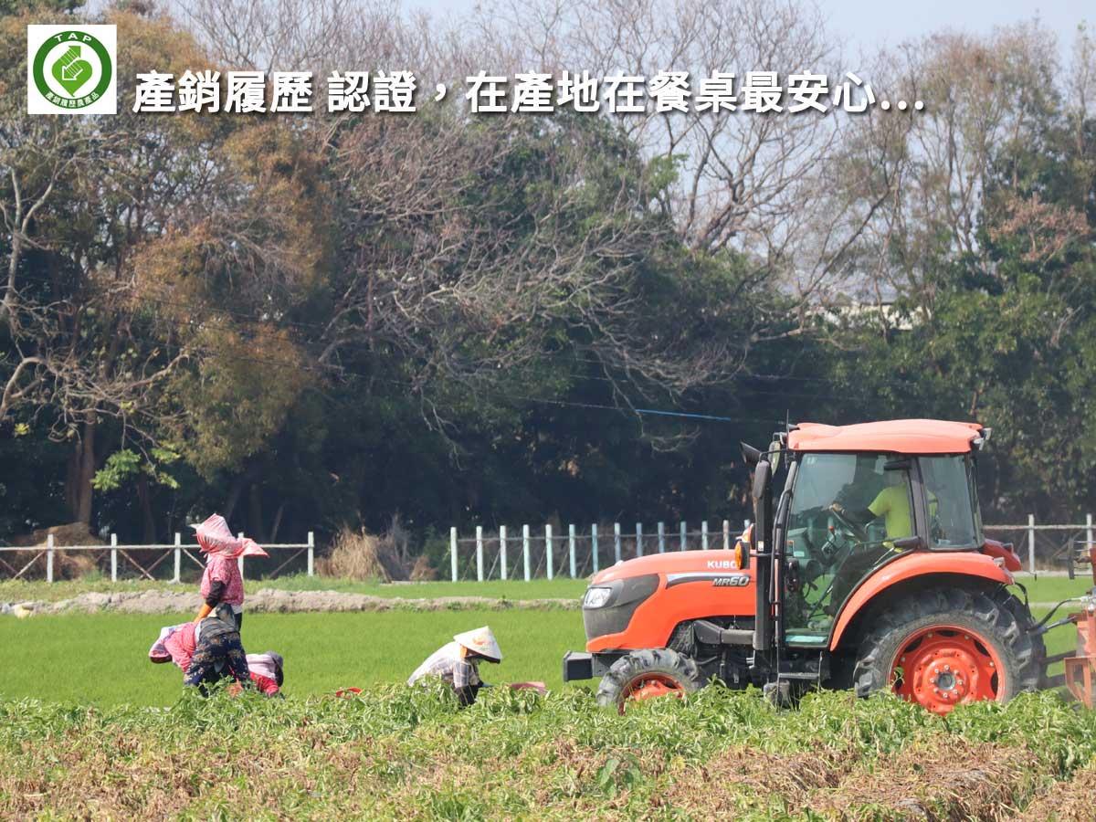 ▲▲▲ 由斗南農會輔導,每一顆都有安心TAP認證喔。