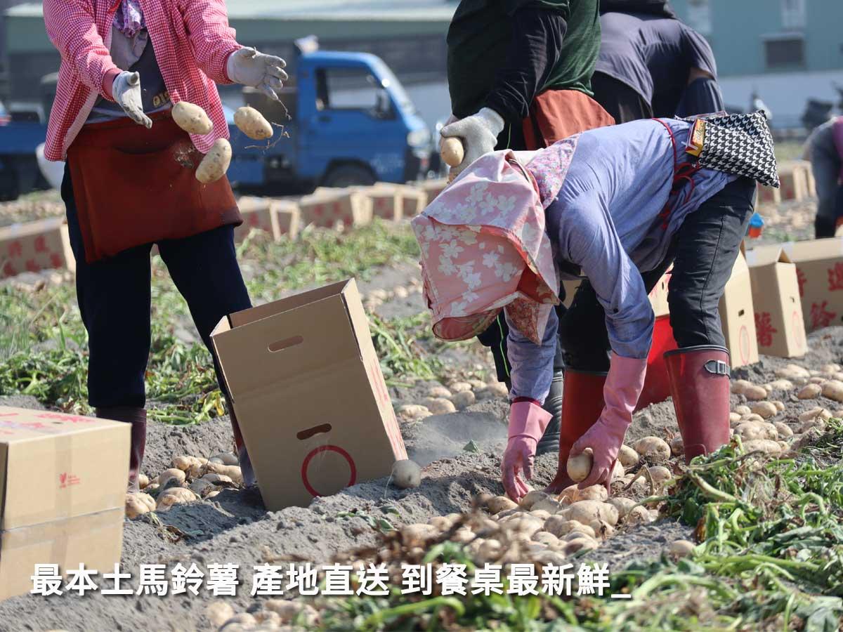 一方水土養一方人,吃在地的新鮮綿密,是進口的無法比的。