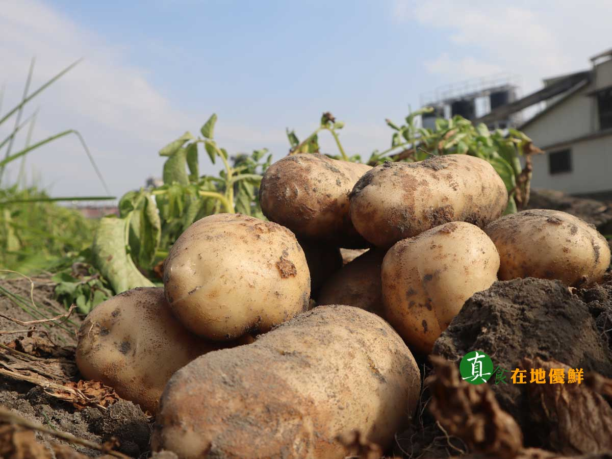 ▲▲▲我們的馬鈴薯是有產銷履歷認證,讓您吃的很安心。