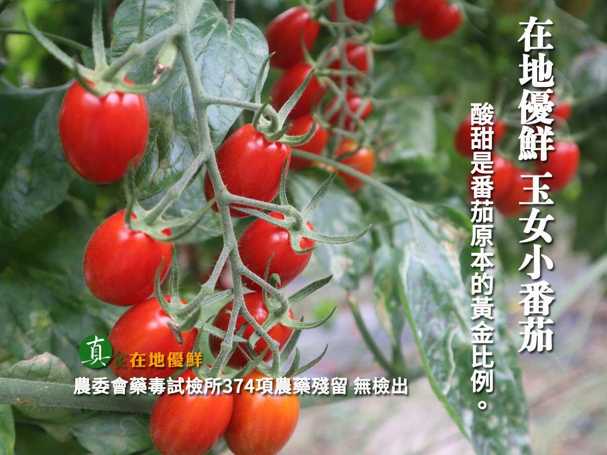 雲林 『在地優鮮 玉女小番茄』,品質佳,熊蜂 授粉正確,所以口感Q彈 飽滿…