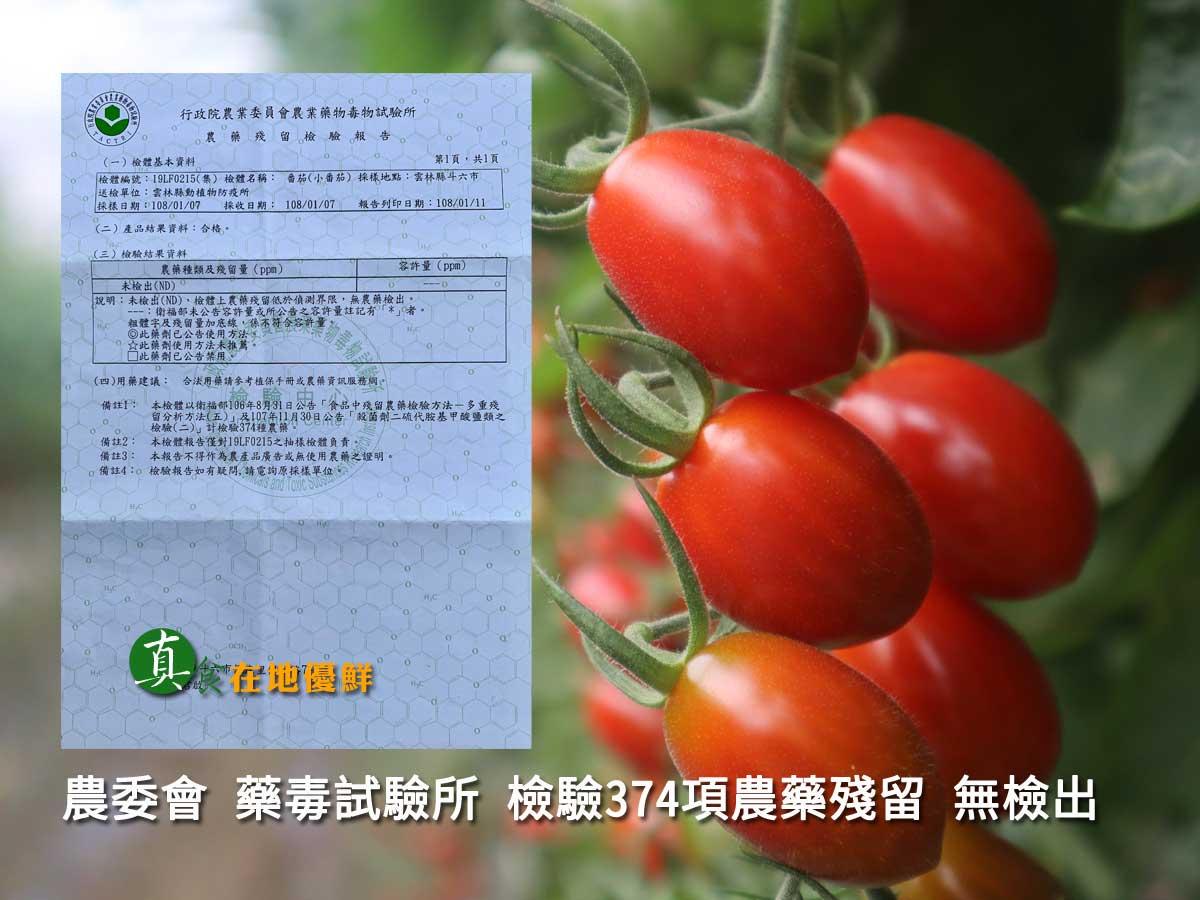 ▲▲▲我們的在地優先 玉女小番茄,是做到農藥無檢出,市售的小番茄是很難辦到的,因為讓您吃的很安心是我們的理念。